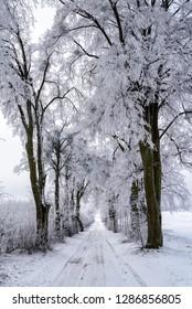 snowy alley in Masuria in eastern Poland in Winter