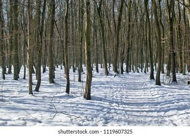 Snowy beech forest with sunshine and shadows