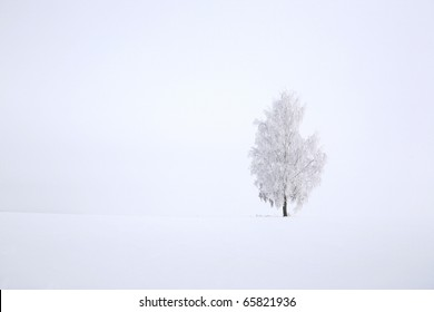 Snowy birch tree agains clear blue sky in winter landscape