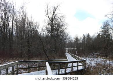 Snowy boardwalk in Rattray Marsh, Mississauga, Ontario