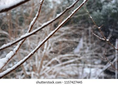 snowy branch, winter