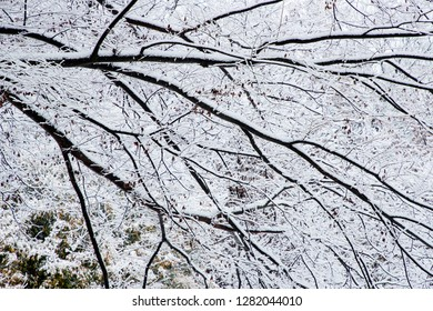 Snowy branches of tree on winter day