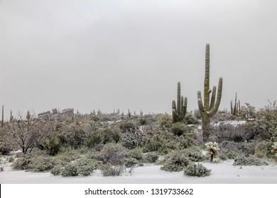 Snowy cactus in Scottsdale Arizona