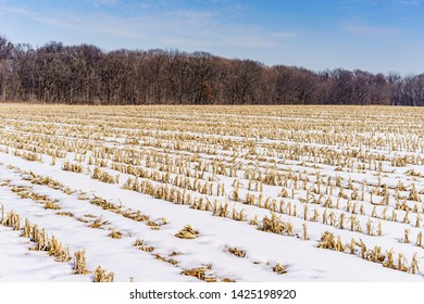 Snowy cornfield with rows of maize stubble (from autumn harvest) near woods in winter, northern Illinois, USA, for seasonal, rural, or agricultural themes