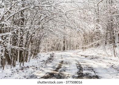 Snowy country road through trees