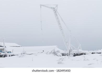 snowy crane