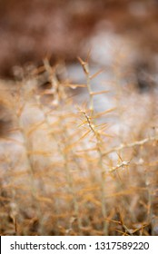 snowy desert plant with thorns winter nature background