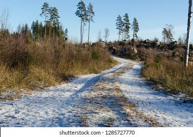 Snowy dirt road through a bright forest