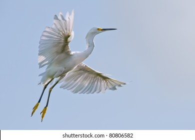 snowy egret in flight with wingspread against bright sky