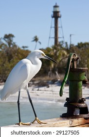 Snowy egret sitting on railing of fishing pier on Sanibel Island, Florida, with lighthouse in the background.