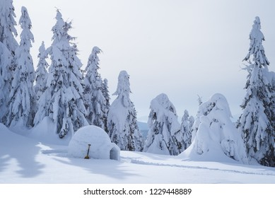 Snowy Eskimo igloo in winter forest. Landscape with shelter for tourists. Picturesque view with snowdrifts and trees in the snow