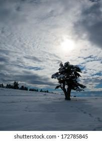 snowy field with lone tree