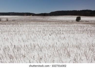 Snowy field straws at winter night