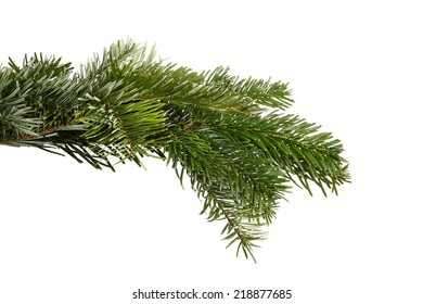 Snowy fir branch in front of a white background