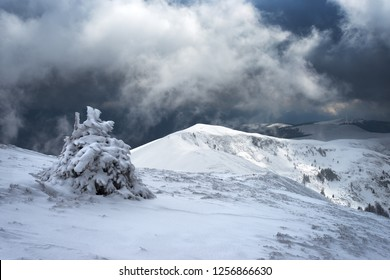 Snowy fir tree on background of mountains and of gloomy sky