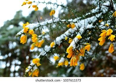 Snowy flowers closeup