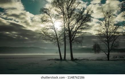 Snowy and foggy field