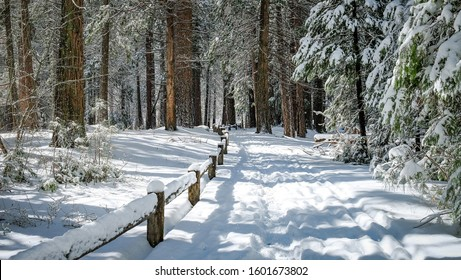 A snowy foot path through the Yosemite Valley