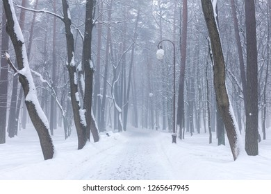 snowy footpath in city park on misty winter day. park alley covered with snow