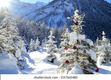snowy forest with christmas tree in front