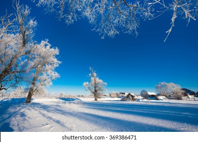 Snowy forest with different trees against the sky