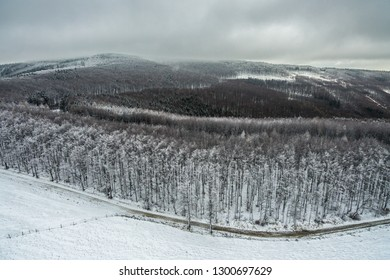 snowy forest from dron