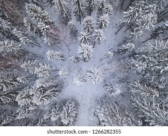 Snowy forest in drone shot from above. Beautiful pattern of frozen trees on cold winter day in Finland.