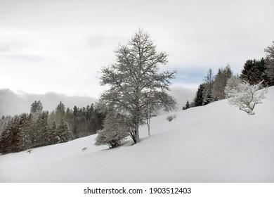 snowy forest on a gloomy day
