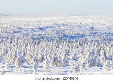 Snowy forest on sunny day