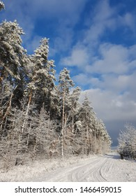 Snowy forest on a sunny day