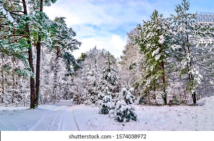 Snowy forest on winter landscape - Shutterstock ID 1574038972