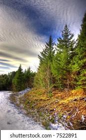 Snowy forest path in Nova Scotia, Canada