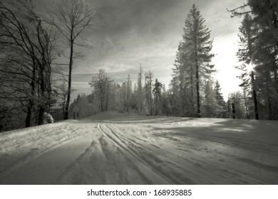 snowy forest, ski slope