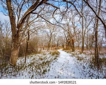 Snowy forest and trail in Quarry Hill Nature Center, Rochester, Minnesota on a snowy day