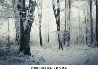snowy forest winter landscape