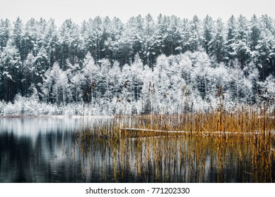 Snowy forest in winter near the lake with a small bridge for fishing in Lithuania