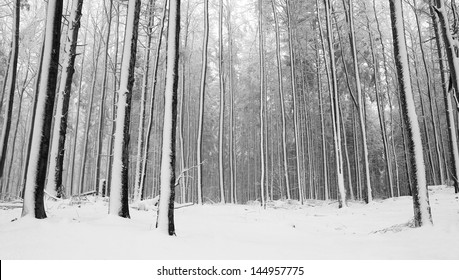 Snowy and freeze winter morning in the forest