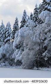 Snowy frozen forest around the lake