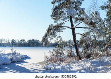 snowy frozen tree winter lake on background