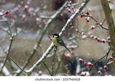 snowy garden with birds