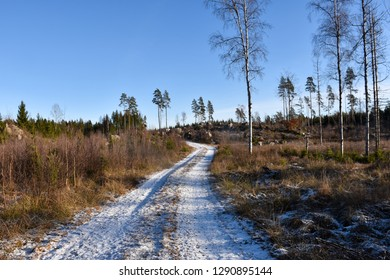 Snowy gravel road through a coniferous woodland