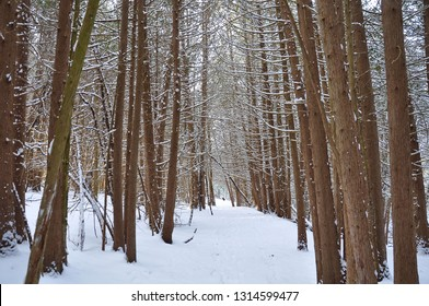 Snowy grounds in the woods during winter