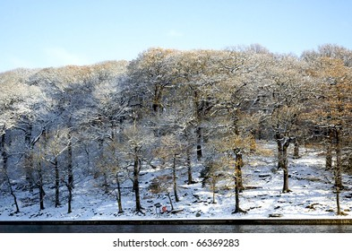 Snowy hillside with trees by a lake