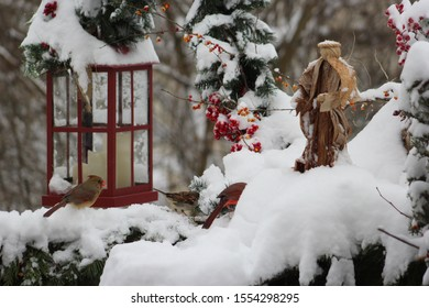 Snowy holiday winter scene of an angel standing over a female Cardinal, house sparrow and male Cardinal partially hidden in the snow, with a red lantern, evergreens and red berries in the background.