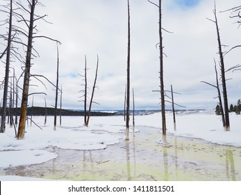 Snowy landscape with algae filled stream in the Lower Geyser Basin of Yellowstone National Park with standing, dead pine trees.