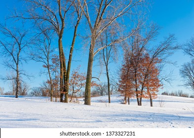 snowy landscape of battle creek regional park in saint paul minnesota