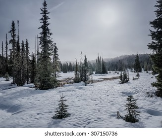 Snowy landscape with different sizes of coniferous trees