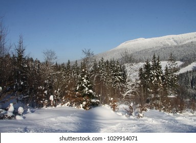 Snowy landscape at the edge of a ski slope with a forest and a view of the mountains near the horizon