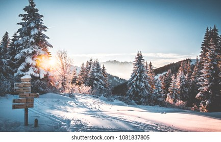 Snowy landscape at sunset with pink colors on trees and fresh snow