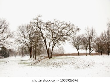 Snowy landscape with trees, under cloudy sky, horizontal image